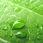 Photo of rain drops on a leaf representative of social selling