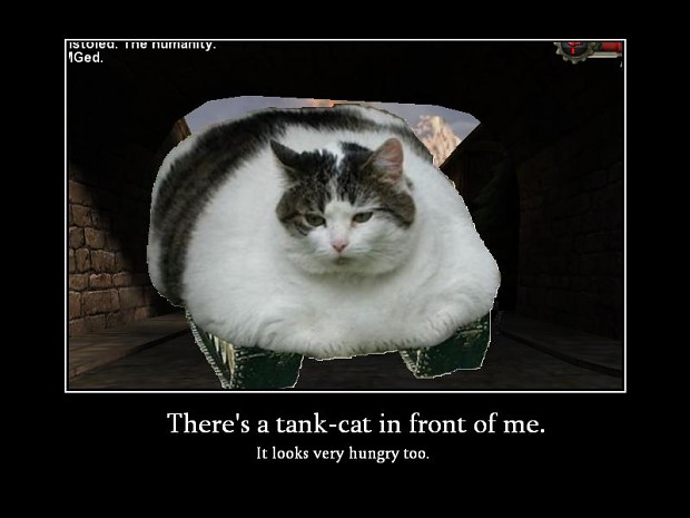 A Normal Tank Cat Image Cat Lovers Mod Db