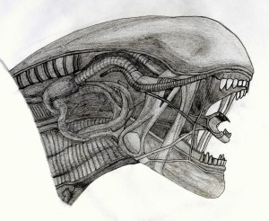 xenomorph drawing head realistic rss report embed