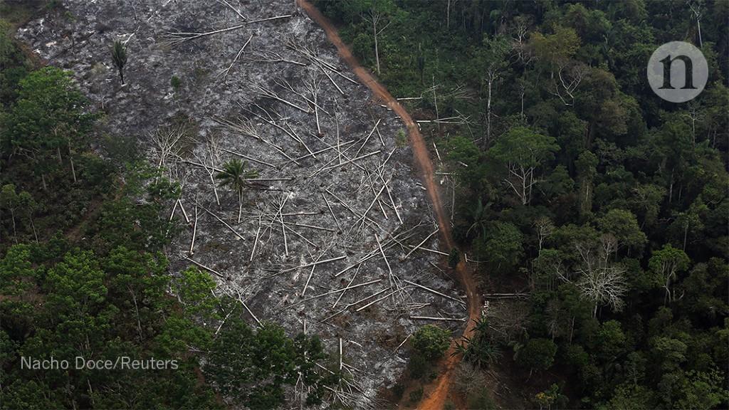 tropical trump sparks unprecedented
