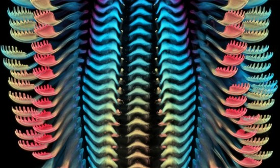 Confocal micrograph of the tongue of a freshwater snail has the appearance of colourful scales