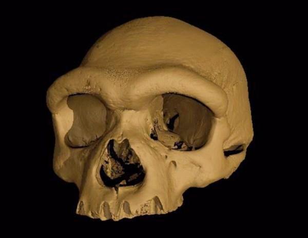 A virtual reconstruction of the Harbin cranium