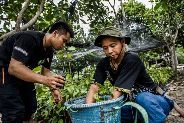 Two workers handle tree saplings being grown to reforest burned areas of Indonesia