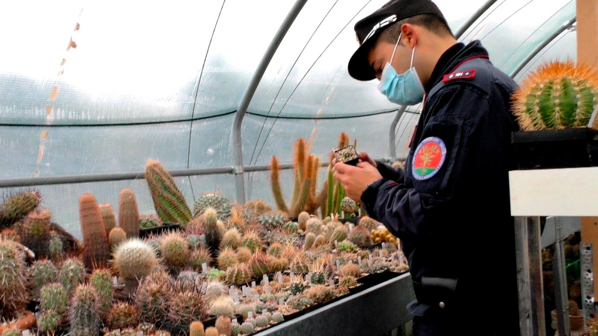 Rare Poached Cacti Found in Italy Sent Home to Native Chile