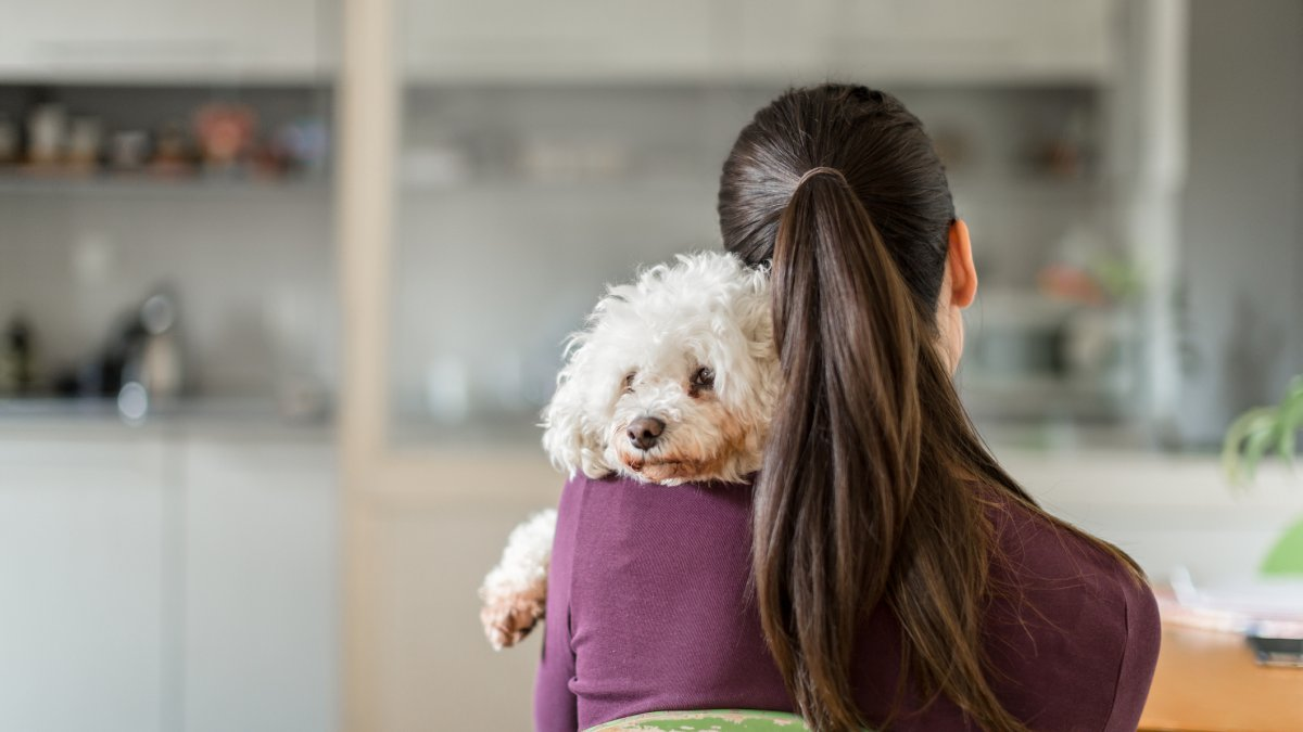 Post Divorce Pet Disputes Are on the Rise — so Are 'Petnups'