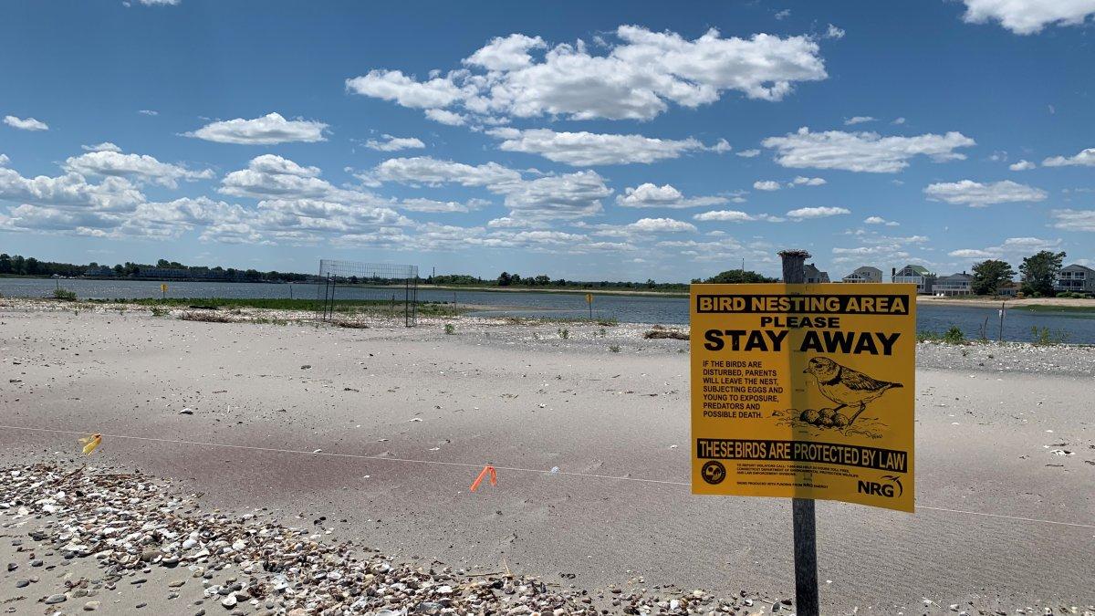 Coastal Flooding Destroyed Dozens of Waterbird Nests Along the Shoreline