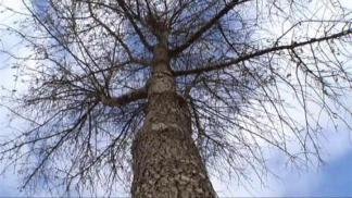 Texas Trees In Jeopardy If Drought Continues