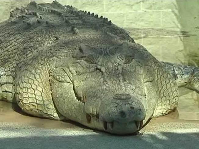 movie crocodile is star