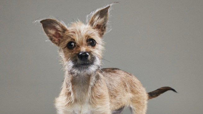Dallas Shelter Dog to Appear in Animal Planet's Puppy Bowl