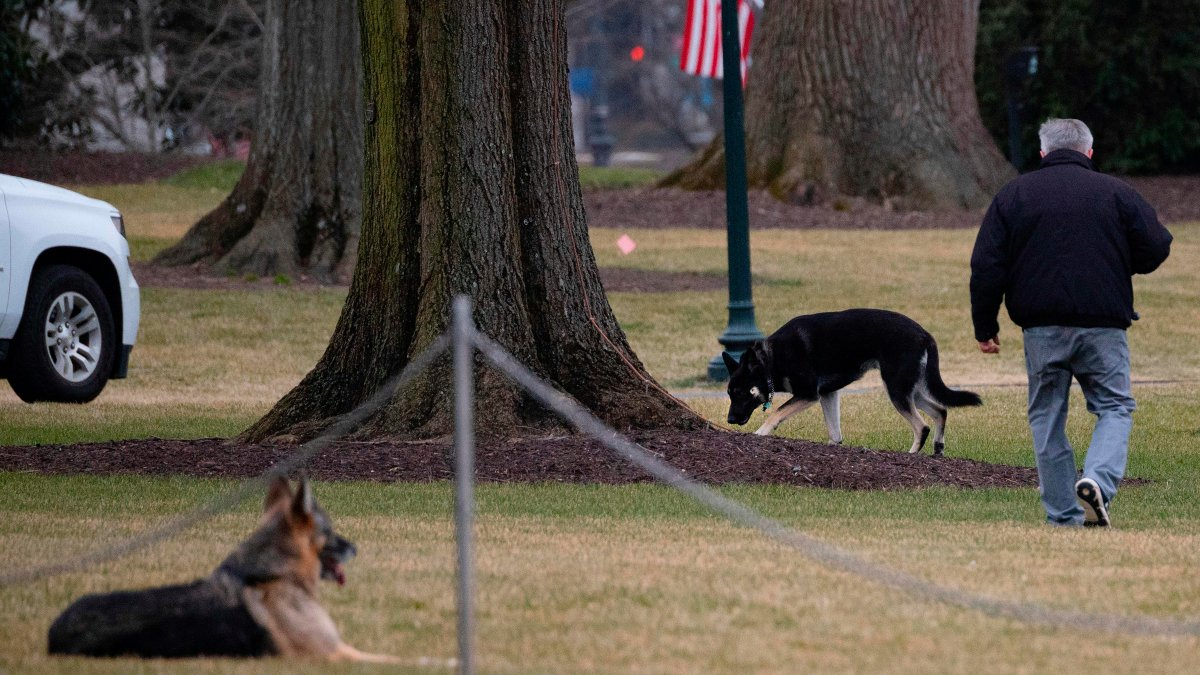 Biden's Dogs Back at White House After Ruff Start 1