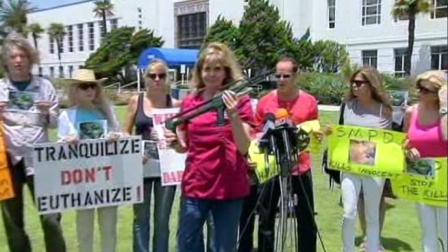 Activists Criticize Mountain Lion Shooting