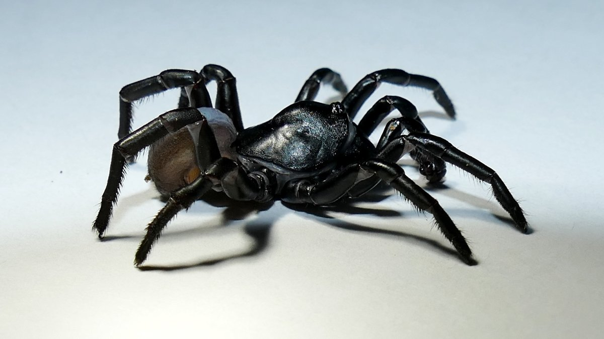 New Spider Species Discovered in Miami