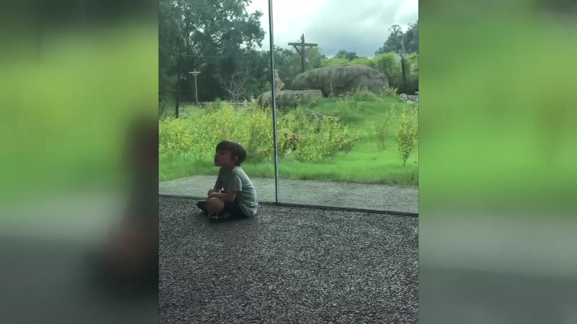 lion sneaks up on