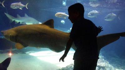 Sandy-Damaged Coney Island Aquarium Reopens This Weekend ...