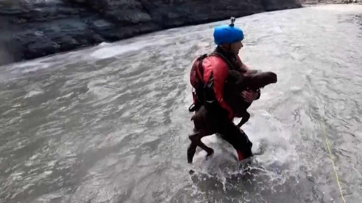Kayakers Rescue Baby Moose From Drowning in Dramatic Video
