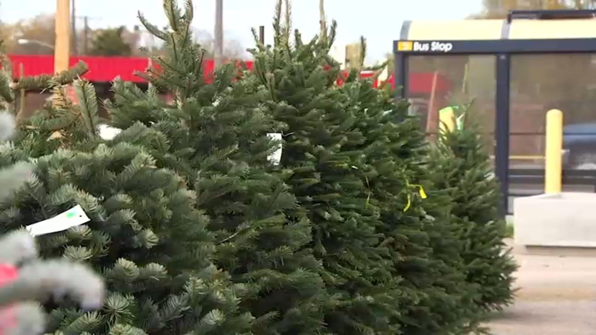 Oceanside 2021 Christmas Tree Removal Where To Recycle Your Christmas Tree In San Diego Nbc 7 San Diego