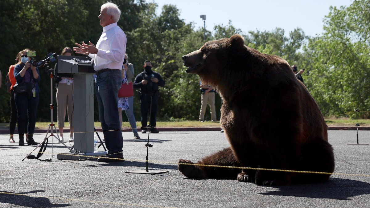 Complaint Filed Against Cox to Stop Use of 1,000 Pound Bear on Campaign Trail