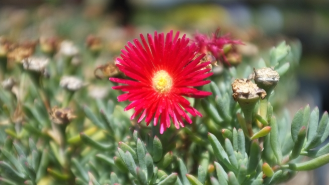 Best Plants to Defend Against Wildfires