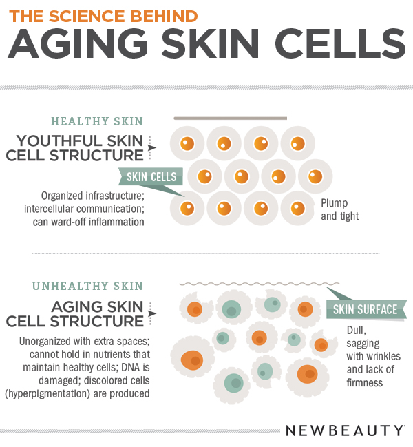 Aging_Skin_Infographic