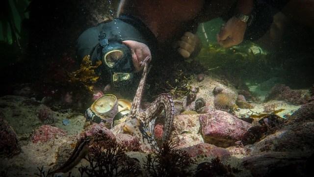 Still from My Octopus Teacher featuring a man underwater looking at an octopus