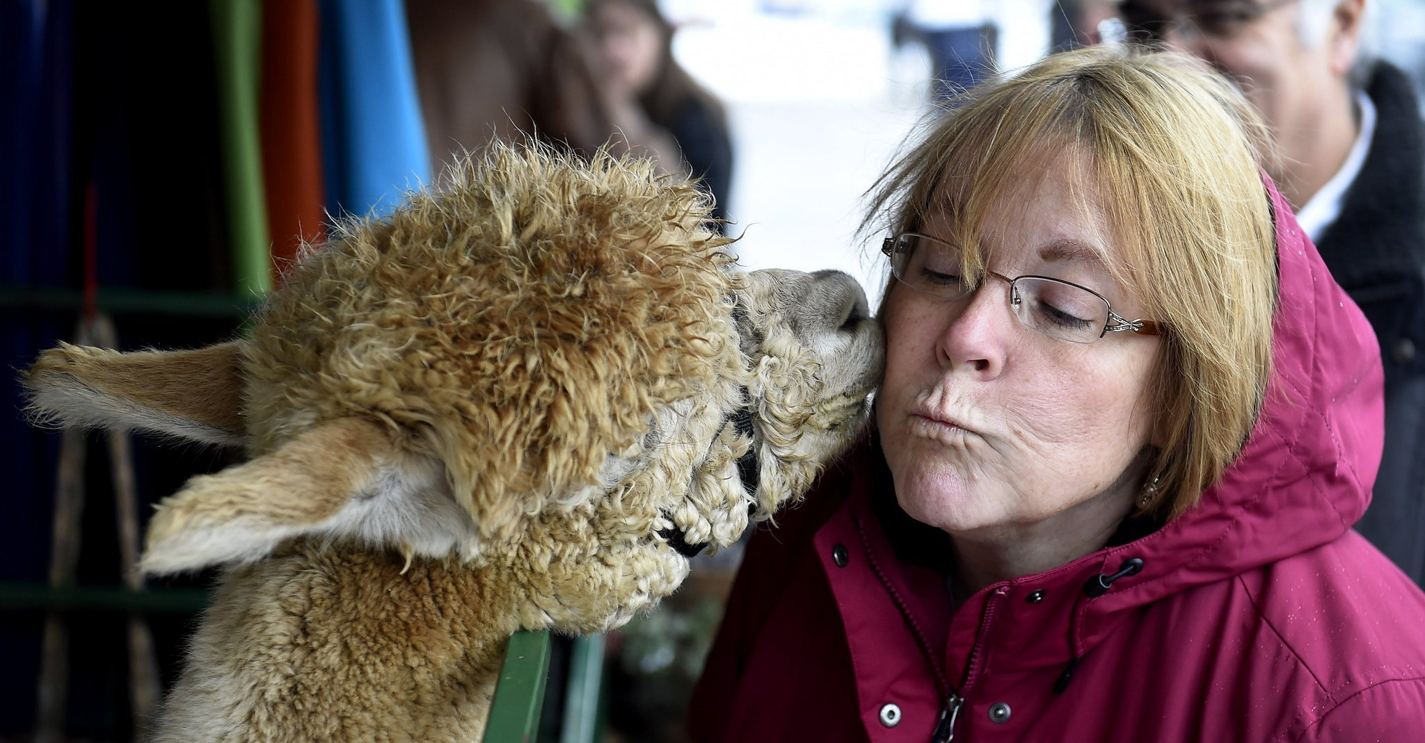 Alpaca farms in the Finger Lakes 7 fun places to visit