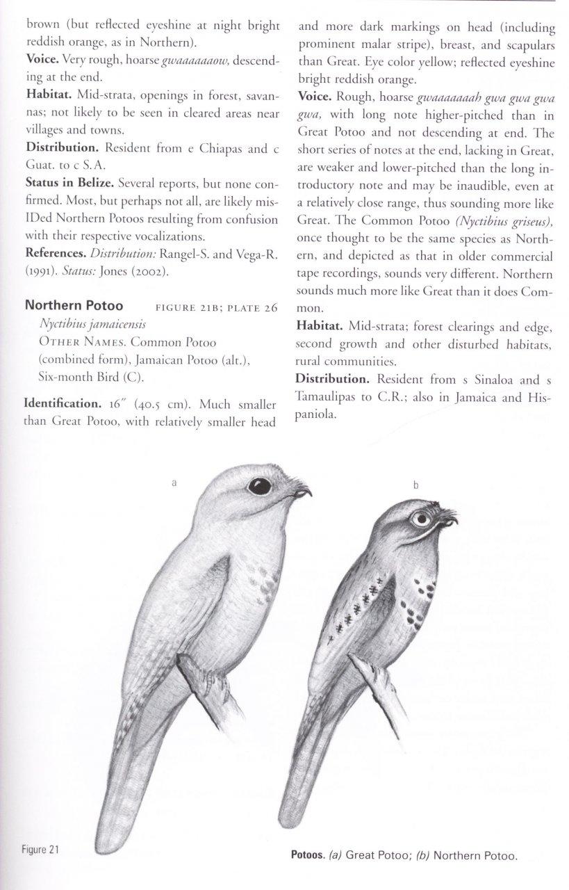 Birds of Belize: H Lee Jones and Dana Gardner: NHBS