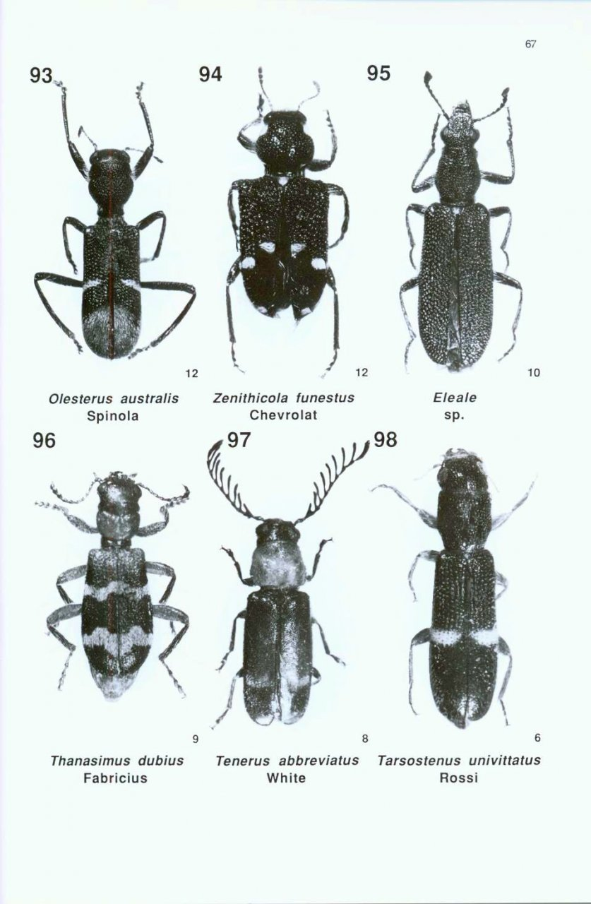 A Guide to the Genera of Beetles of South Australia, Part