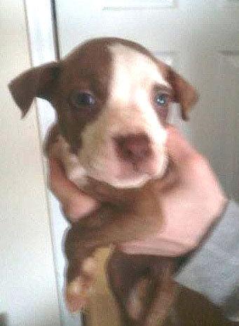Salem County Puppy.jpg
