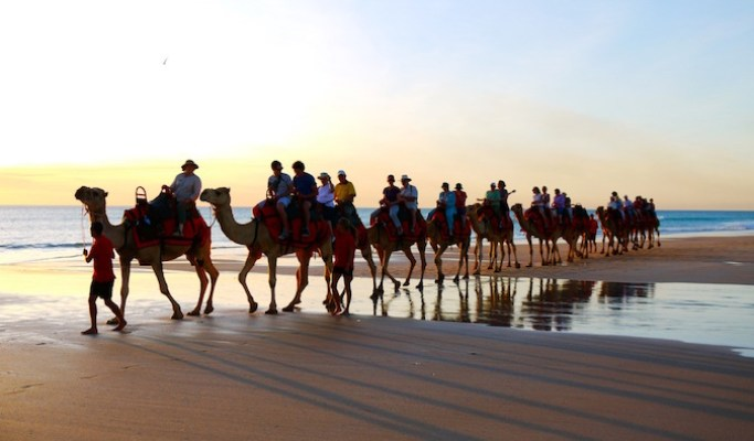 line of camels in Morocco