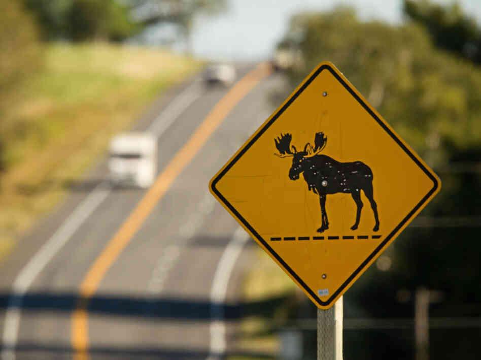 maine moose crossing sign