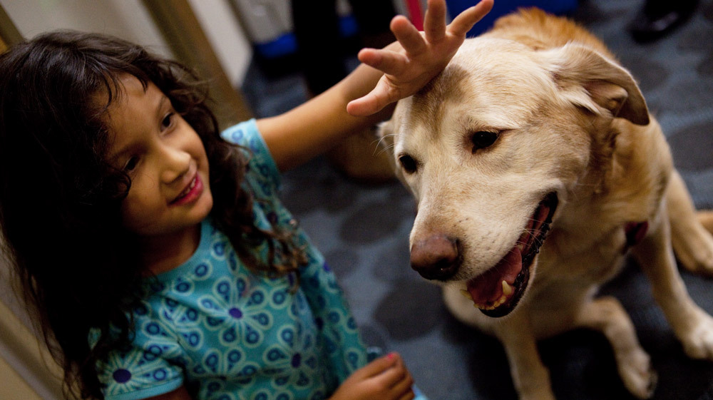 Pet Therapy How Animals And Humans Heal Each Other