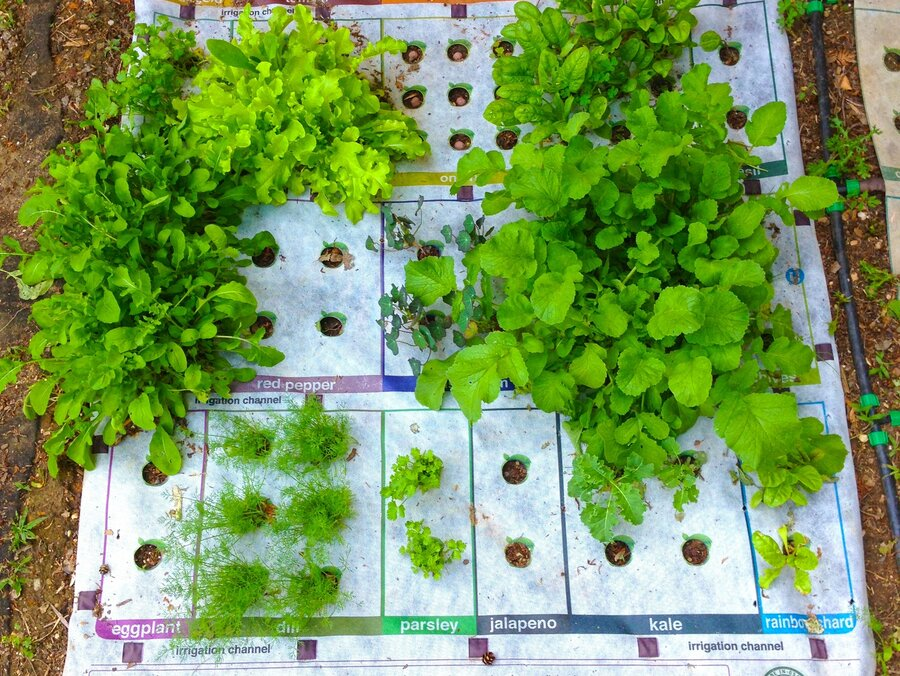 Why Micro Gardening Could Go Big The Salt NPR