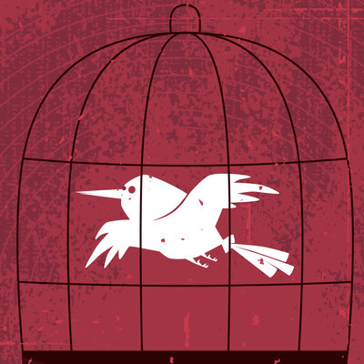 bird flying in a cage