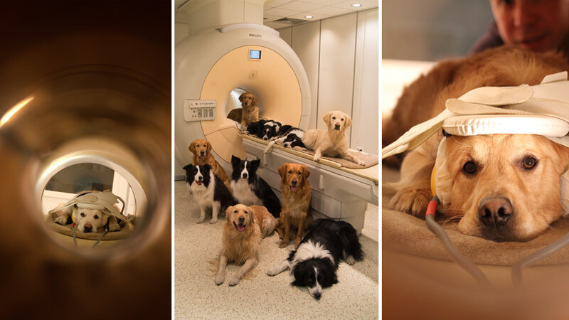 You need me to lie still inside this noisy MRI scanner for 10 minutes? No problem. Just give me some treats. Volunteers pose with the brain scanner at the MR Research Centre in Budapest.