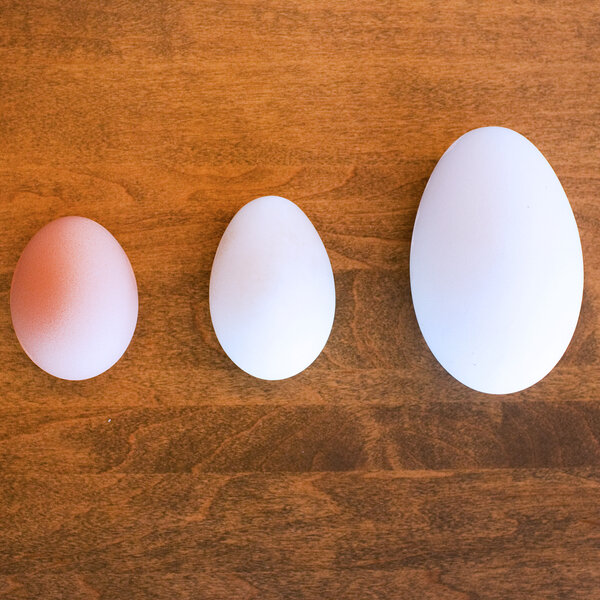 Hunting For The Tastiest Egg: Duck, Goose, Chicken Or Quail?