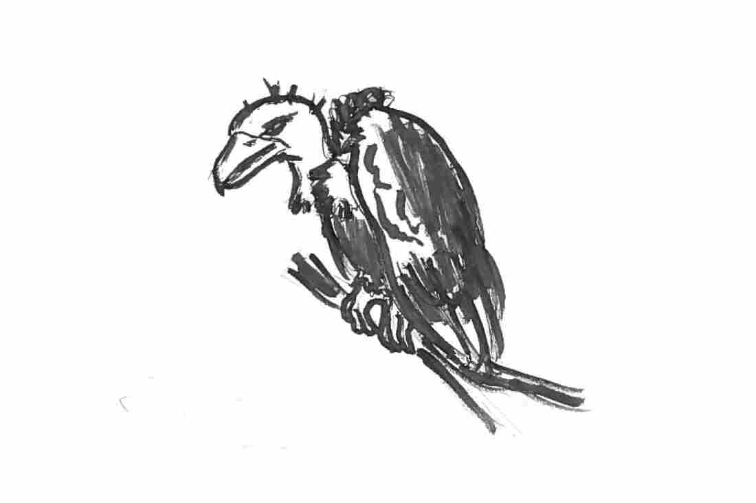 What Not To Serve Buzzards For Lunch, A Glorious Science