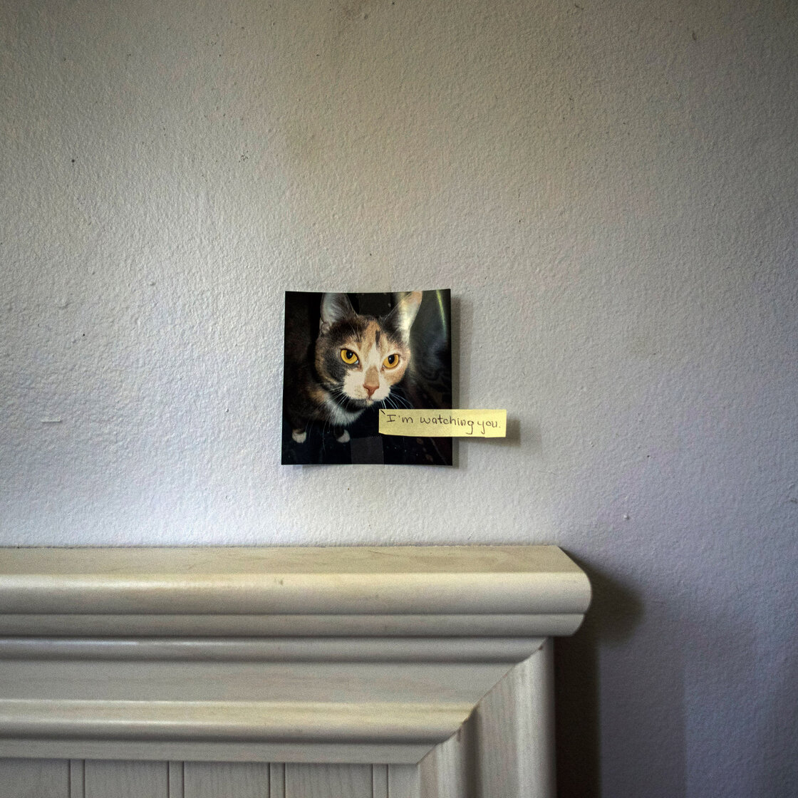 "Meghan keeps a photo of her cat, Boo, on the wall in her bedroom. ""She would stay in her room and keep to herself,"" Kathy, Meghan's mother, says. ""Sometimes that was a good thing because her depression just sucked the life out of you."""
