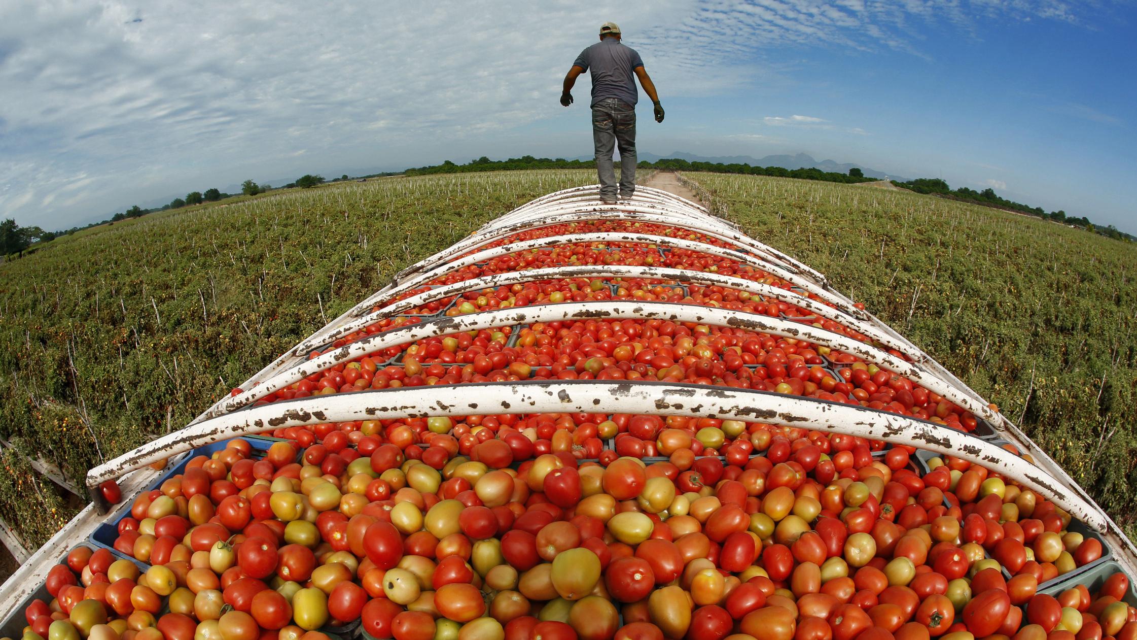 Mexican Megafarms Supplying US Market Are Rife With