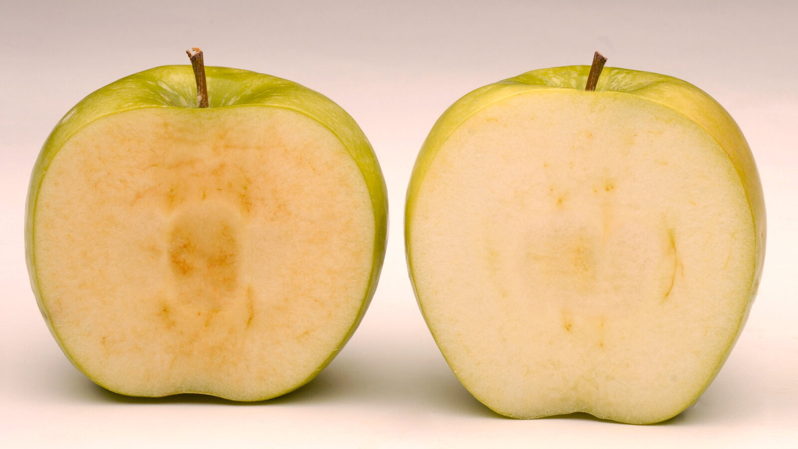 Arctic Granny (right), a GMO variety created by Okanagan Specialty Fruits, got the gren light from federal regulators Friday. The apple doesn't turn brown like a conventional Granny Smith apple (left).