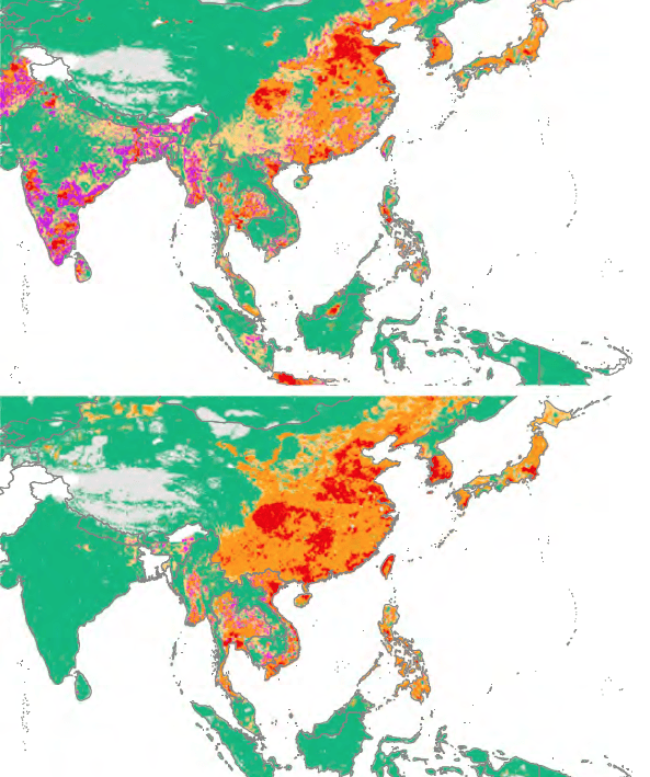 The love of meat is exploding in Asia, and with it, comes antibiotic consumption by chickens (top) and pigs (bottom). Green represents low levels of drug used; yellow and orange are medium levels; and red and magenta are high levels.