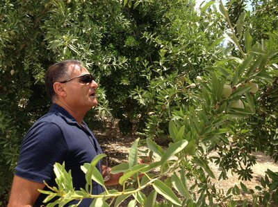 Farmer Efi Cohen inspects almond trees on a kibbutz south of Jerusalem. The Israeli government says it's safe to use treated sewage water to irrigate tree fruit, but not all crops.