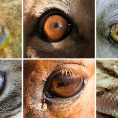 Canine Eye Diagram Right Fender Humbucker Wiring Shapes Of The Animal World Hint At Differences In Our Lifestyles