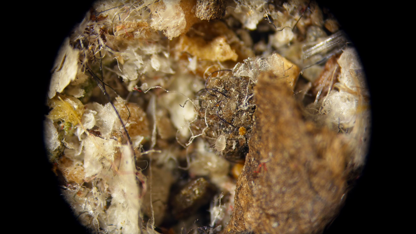 Meet The Tiny Critters Thriving In Your Carpet, Kitchen