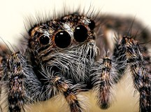 A Spider Across The Room Can 'Hear' You, Study Finds : The ...