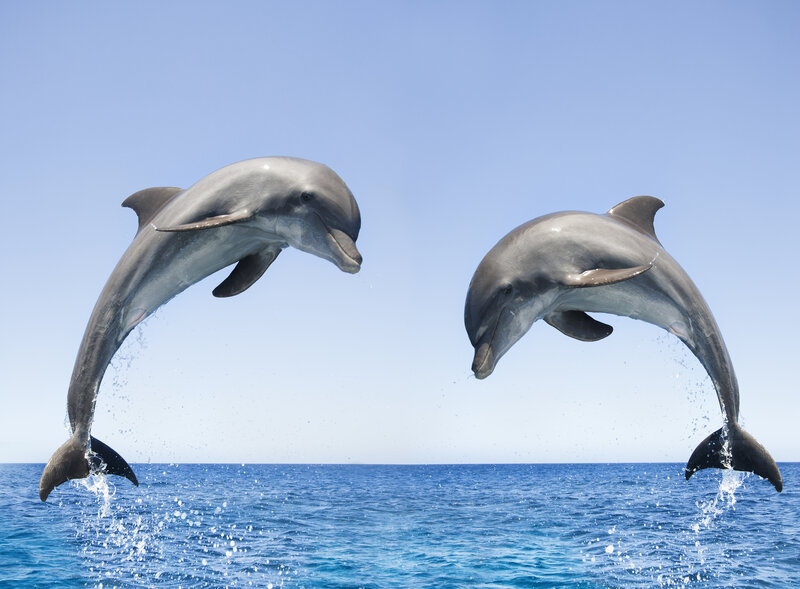 bottlenose dolphins spotted off