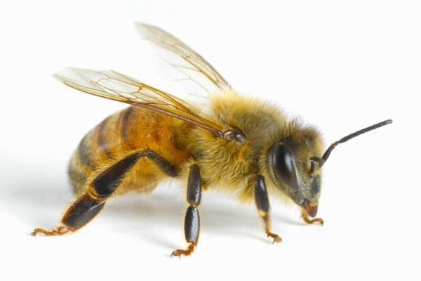 Bees Can Learn The Concept Of Zero, Study Finds : NPR