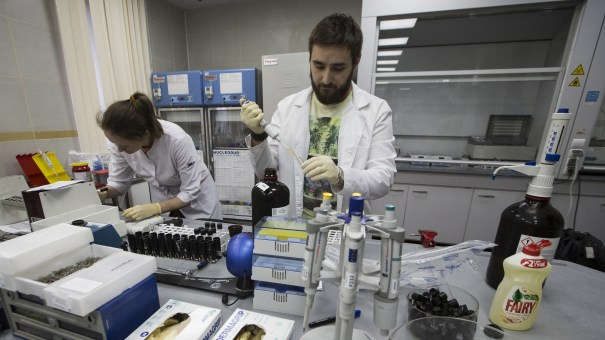 Workers, photographed in 2016, at the Russian Anti-Doping Agency. An executive committee at the World Anti-Doping Agency is considering reinstating the Russian organization.