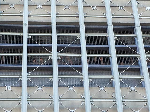 Image result for brooklyn metropolitan detention center