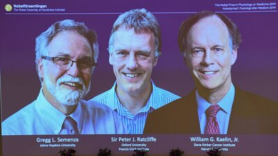 Trio Wins Nobel Prize In Physiology Or Medicine For Work On Cells And Oxygen
