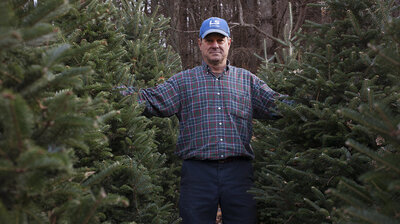 A Christmas Tree Thrives On Farms, Struggles In The Wild
